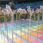 東京ドーム 国際蘭展