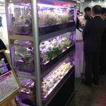 LED植物ラック