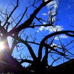 26. Februar: Der große Marillenbaum ist auch schon geschnitten