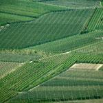 14. April: Die Apfelplantagen im Etschtal bilden jetzt im Frühjahr ein sattgrünes Mosaik.