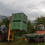 19. September: Jungbauer Hannes beim Verladen der Äpfel. In eine große Plastikkiste passen etwa 300 Kilogramm Tafeläpfel.