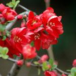 18. März: Auch die Ziersträucher sind aus dem Winterschlaf erwacht und stehen schon in Blüte. Kein Wunder bei über 20 Grad Celsius.
