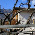 26. Februar: Die Hauspergola mit dem frisch gestrichenen Balkon im Hintergrund