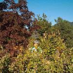 23. Oktober: Wer versteckt sich da im herbstlichen Wald?