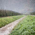 09. November: Der tagelange Regen hat die Abzugsgräben im Etschtal anschwellen lassen.