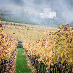 09. November: Schloss Korb im Nebel