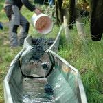 25. September: Die Trauben rauschen über die Rutsche in die Tiefe.