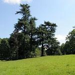 the park of the Domaine de Joreau