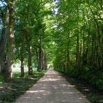 Allée d'entrée au Domaine de Joreau, Gennes