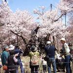 4月2日 午前は甲斐駒ケ岳もクッキリ、桜もあり全てが美しい