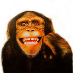 scimpanzè
