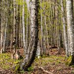 Baum am Grimmig, 90x90 cm