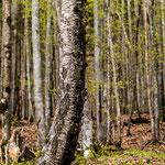 Baum am Grimmig, 80x180 cm