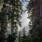 Lichteinfall am Bodensee, 90x90 cm