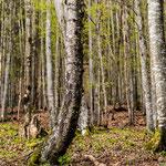 Baum am Grimmig, 90x140 cm