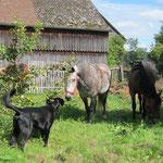 Paco mit Ponies