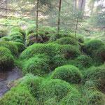 Naturschutzgebiet auf tschechischer Seite nahe Reichenau