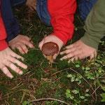 Mit Kindern in den Pilzen