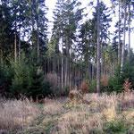 Heutige Waldlichtung