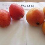 Heido und Orangered