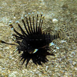 Unterwasserwelt bei Gato Island