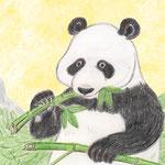 パンダの食事