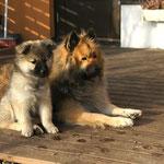 Helmi mit der großen Freundin Cami