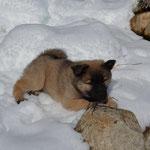 Schnee!!! Gibt es den nur in der Schweiz?