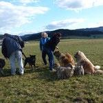einsammeln der 14 Hunde auf der großen Wiese