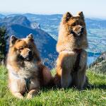 vor den Bergen des Salzburger Alpenvorlandes