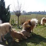 Mama Fahima, Cousine Happy und Henry zu Besuch bei Hiron und Papa Azou