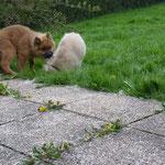 """Henry:""""Nein keine Spur, muss mich nur um Petermayers Garten kümmern, das viele Unkraut gehört entfernt!"""""""