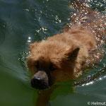 """er kann schwimmen """"Seepferdchenabzeichen"""" in Gold!!!!!!!!!!"""