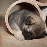 Schlafplatz in der Rolle