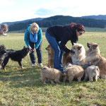 verzweifelte Bemühungen alle Hundchen zu platzieren