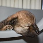 Schlafbox 1