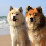 eine Einheit: Gwendolyn und Kimbo