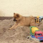 Lieblingsspielplatz: der Sandhaufen