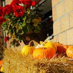 Herbst im Senggihof.