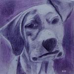 Jack crayon indigo
