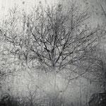 whisper of trees, fine art print, 35 x 50 cm, 2013/18