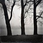 whisper of trees, fine art print, 30 x 30 cm, 2013/16