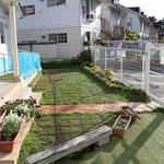 また 園庭の芝がはがれてしまい、雨が降ると水たまりができてしまい滑りやすかったので 一部芝を張り替えています。