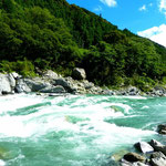 自然豊かな吉野川。いつもより、1m以上水位が高いとのこと