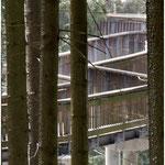 Waldwipfelpfad
