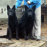 Барк и его отец Verner