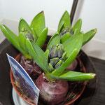 小倉のマッサージ店リセッタの植物