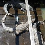 Krokofarm