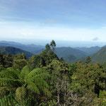 Mount Batu Brinchang (2.032 m)