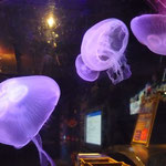 KL Aquarium